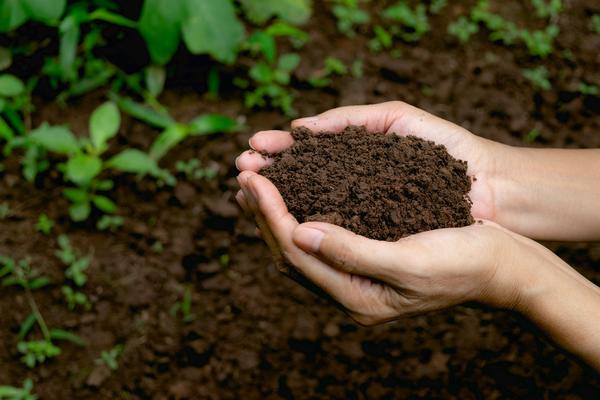 hand-holding-fertile-soil-for-plant-to-growing-in-nature-concept